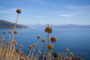 Road-trip in Corsica