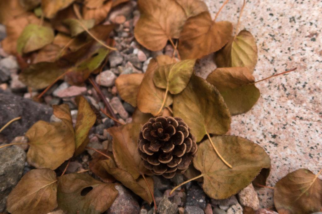 Nature Corsica wild