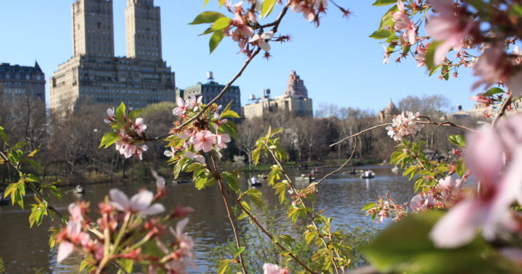 Where to Wander? Five great parks in NYC